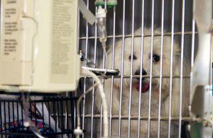 Dog Emergency Vet