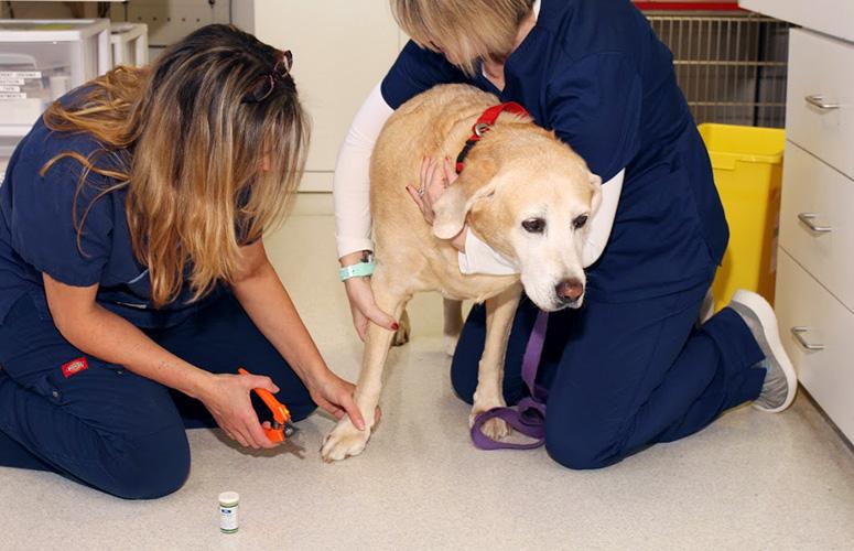 Dog-Wellness-Exam