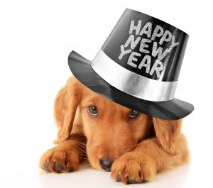 Set some new year's resolutions for your pet, and work toward goals that result in better health and more happiness for everyone involved.