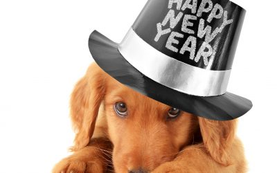 New Year's Resolutions for Your Pet