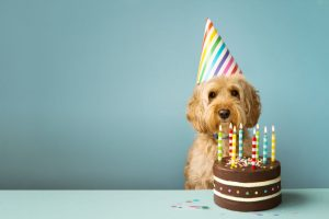 At Longwood Vet, we believe you should never miss the chance to celebrate your pet's birthday.