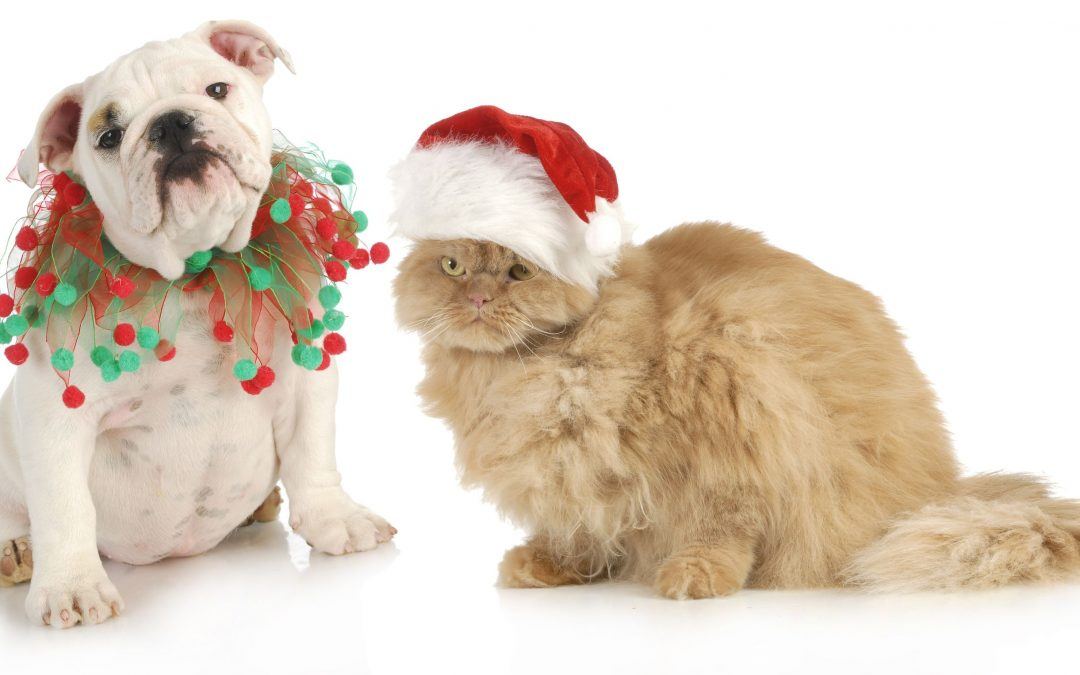 Pet Approved Christmas Gifts