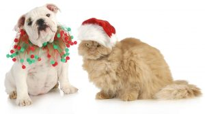 Check out our list of pet approved Christmas gifts your cat and dog will sign off on.