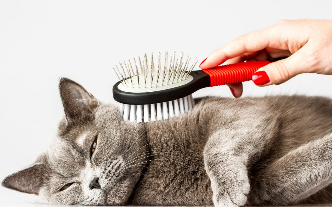 Pet Grooming Basics