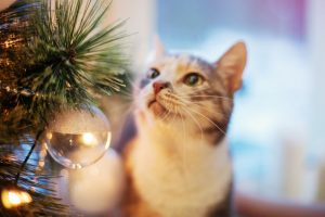 Create a pet safe Christmas tree so you can celebrate the season while safeguarding your cats and dogs too!