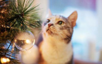 Creating a Pet Safe Christmas Tree