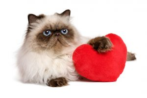 When it comes to pets and Valentine's Day, they really do make the best dates.