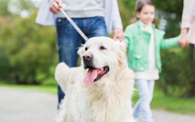 Leash and Collar or Lead and Harness? Best Restraints for Your Pup