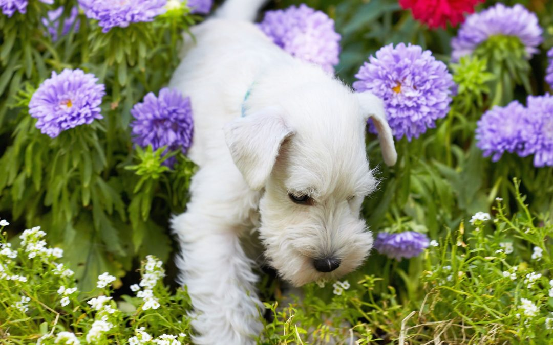 Planting a Pet Friendly Garden