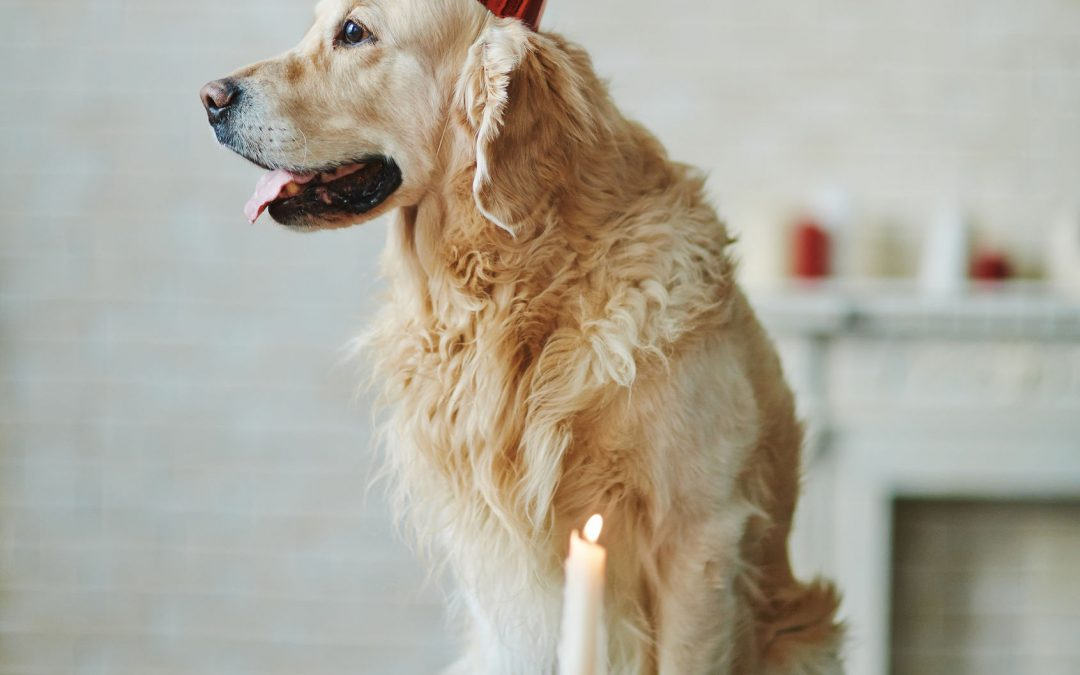 5 Reasons Why You Should Always Celebrate Your Pet's Birthday