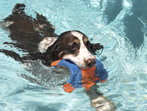 10 Waterside Tips for your Pet This Summer