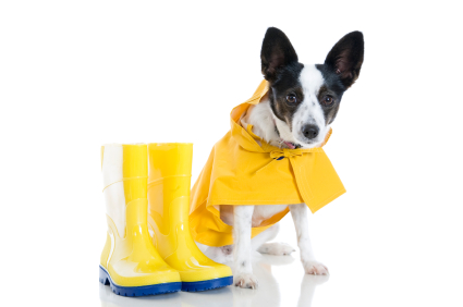 Pet Emergency Kit– Prepare For Hurricane Sandy