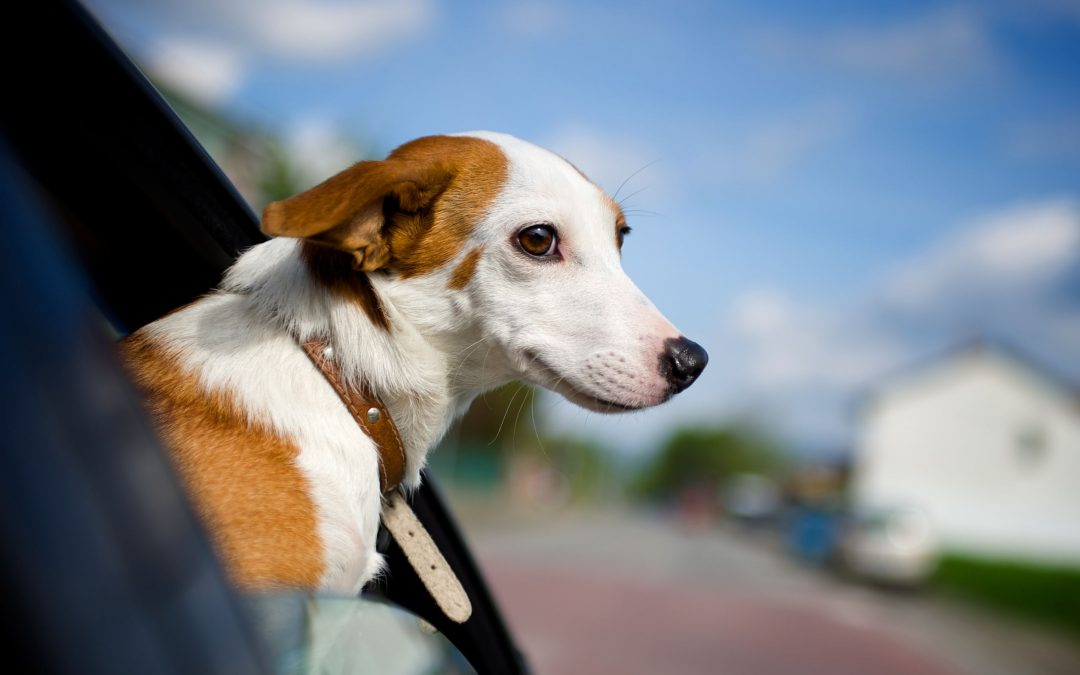 Vacation Planning Tips for Dogs with Motion Sickness