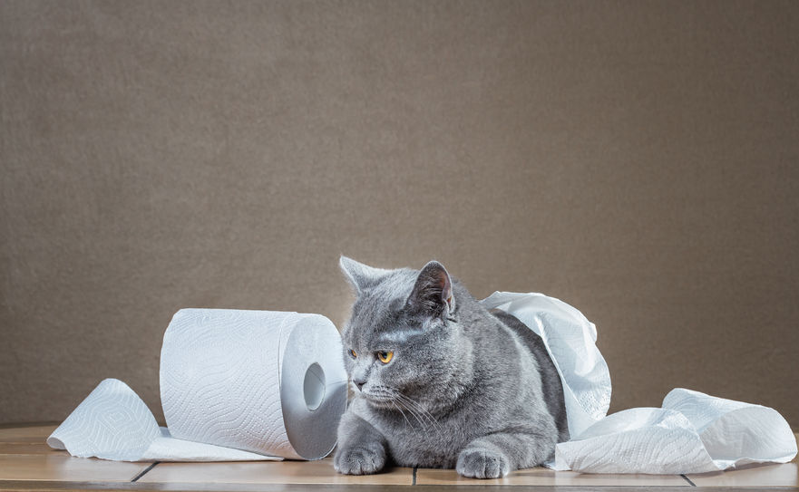 Behavioral Problems in Cats