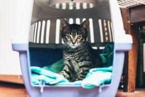 veterinarian Unionville PA
