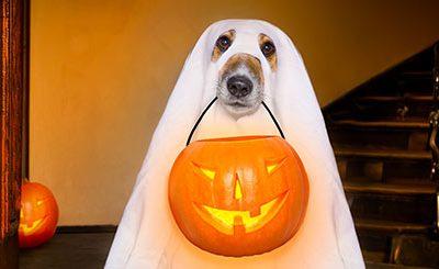 Halloween Hazards