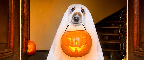 Spooky, Scary