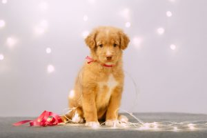 Keep tabs on your lights, and follow our holiday pet safety tips from Longwood Vet.
