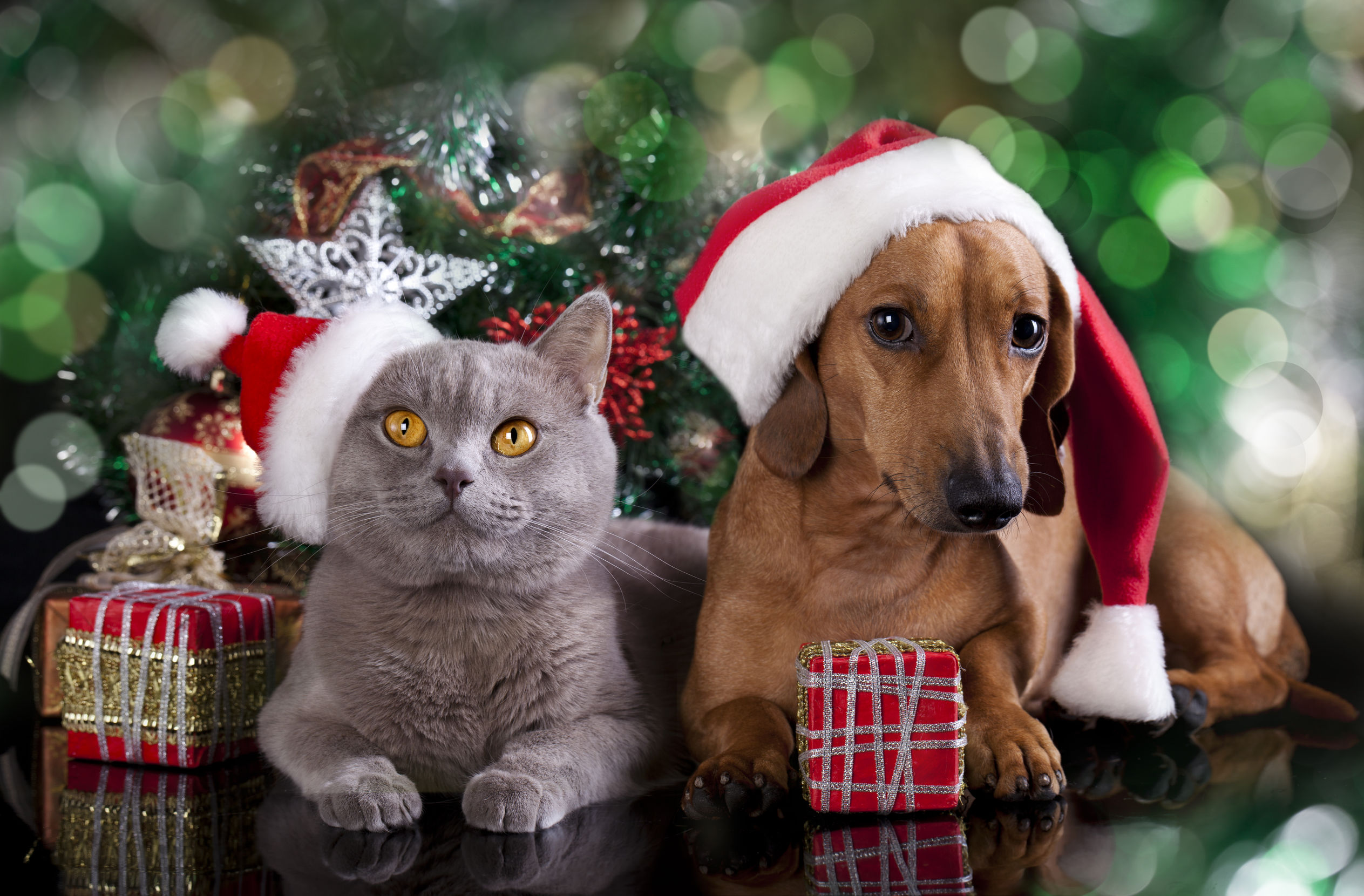 pet christmas gifts Kennett Square | Longwood Veterinary Center