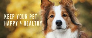 Veterinary Acupuncture Chadds Ford