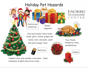 holiday pet hazards