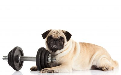 How to Get Your Pet to Lose Weight
