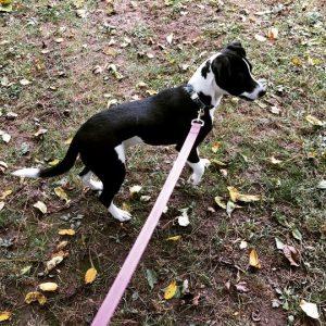 pet adoptions Kennett Square