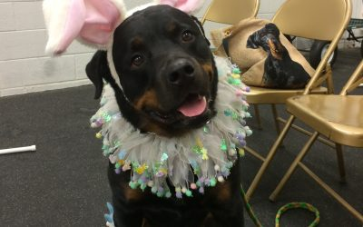 January: National Train Your Dog Month: Featuring Sumo- The Best Dressed Therapy Dog