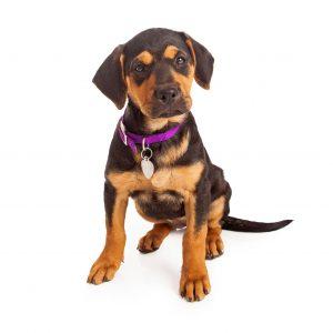 pet resources unionville