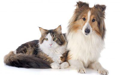 Zoetis Petcare Rewards
