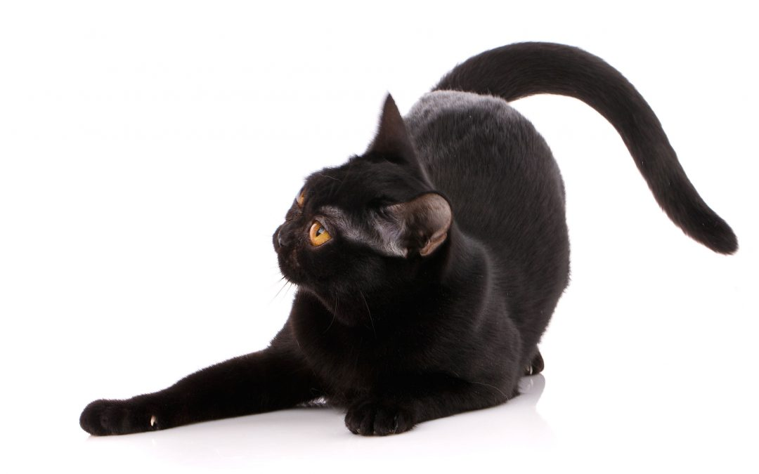 Potential Toxins and your Cat