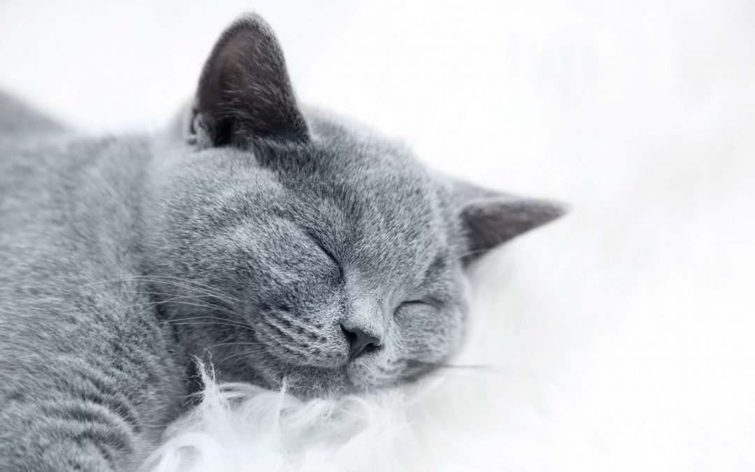 Multi-Part Series Blog: Keeping Your Cat Content