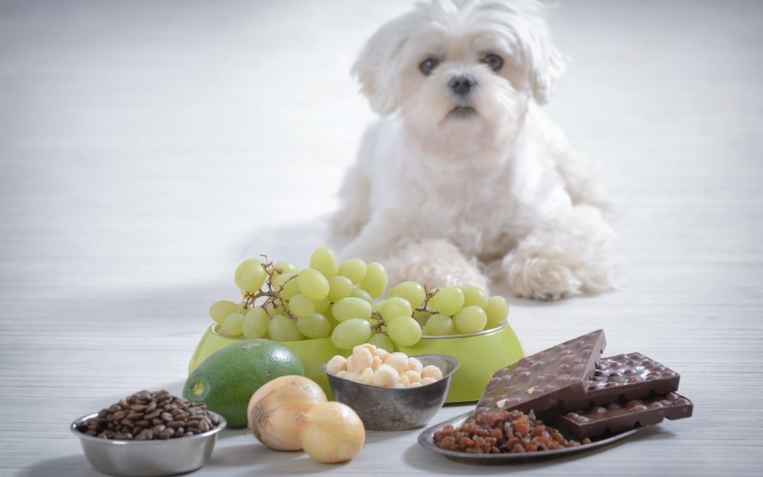 Top Toxins for Your Dog