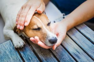 Signs your pet needs emergency care