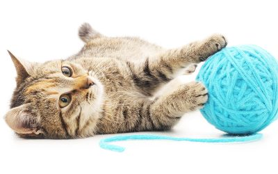 Keeping Your Cat Content Part 4: Toys, Prey Behavior, and Keeping Your Cat Active