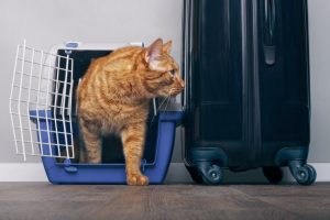 common stressors for cats