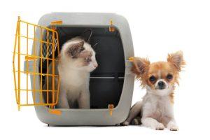 Fear free certified veterinary office