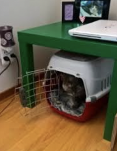 cat carrier covered