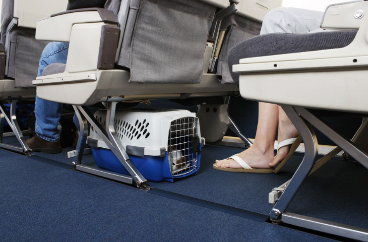 Pets flying commercial airlines