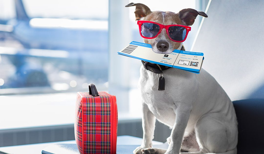 What You Need to Know When Flying with Your Pet