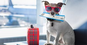 tips for a hassle free flight with your animal