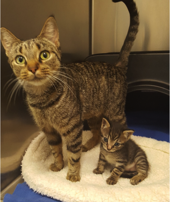 Adopt Beyonce and Blue Ivy