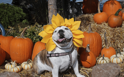 Halloween Pet Picture Party and Costume Contest