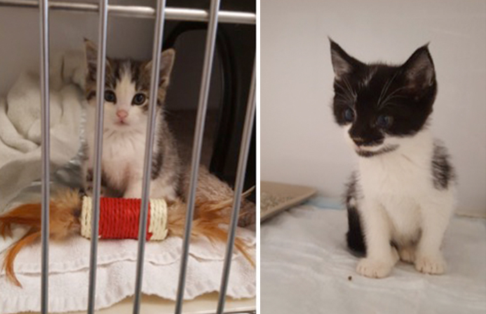Kittens in Need of a Forever Home