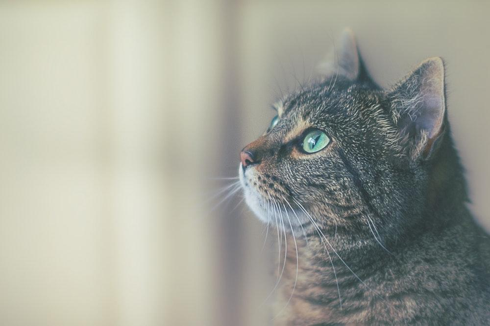 Pet Photography Tips: Tricks for Purrfect Kitty Photos
