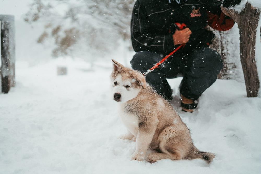 7 Mistakes Dog Owners Often Make in Winter