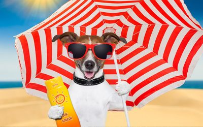 7 Tips To Keep Your Pet Healthy This Summer