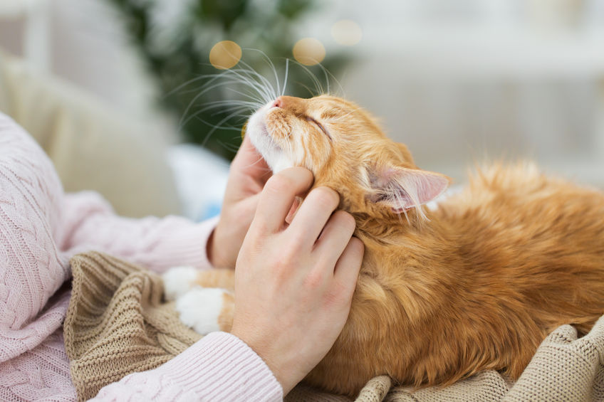 Cats add so much joy to our lives, and we're so thankful during this holiday season for man's best friend.