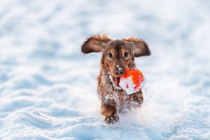 Caring for your dogs in cold weather means understanding their limits!