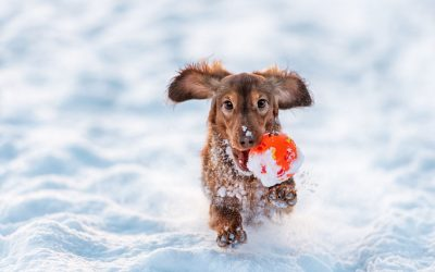 5 Tips for Pet Owners During Wintertime